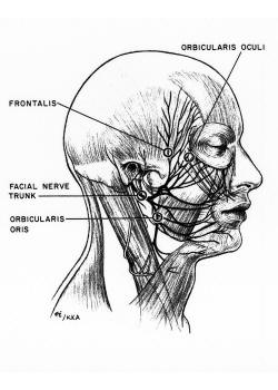 FACIAL PARALYSIS SURGERY/ BELLS PALSY/ FACIAL REANIMATION | NYC